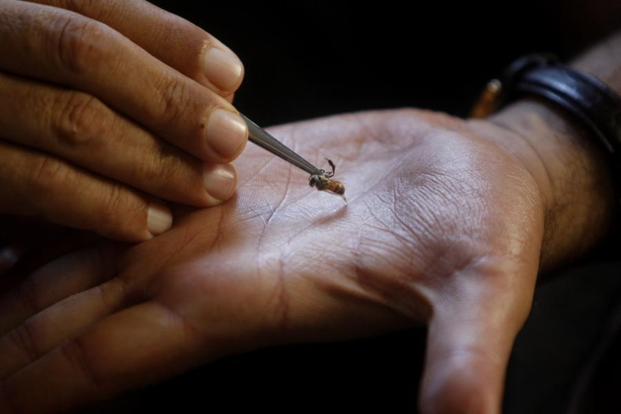 Bee Venom Acupuncture: A Therapy That Could Kill Y ...