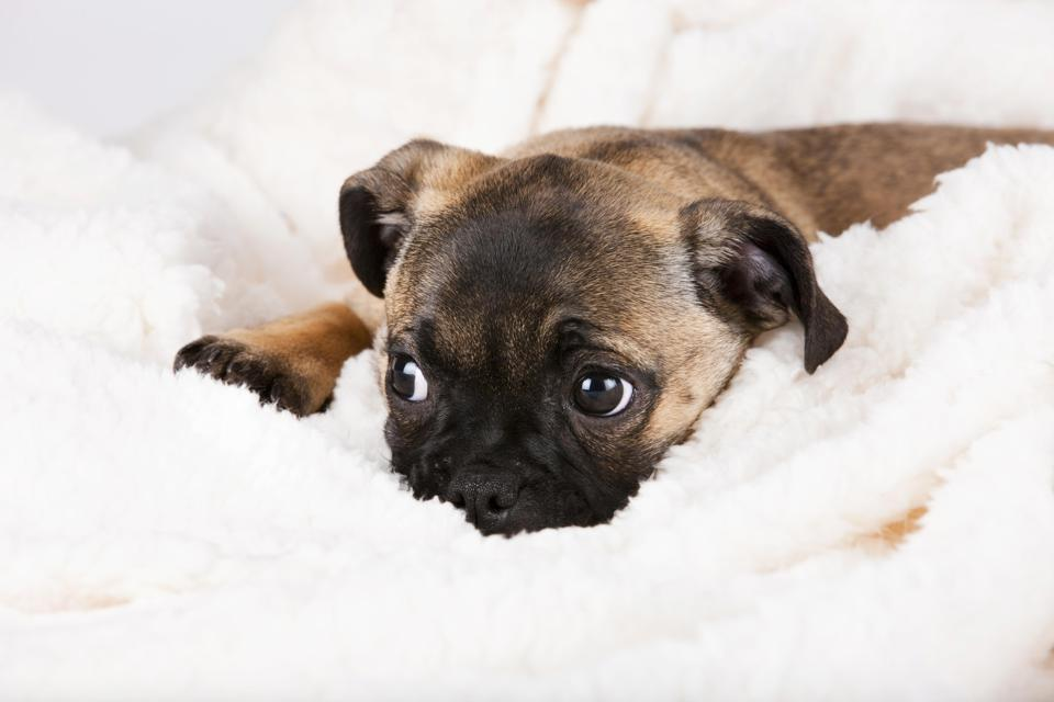 Pets, If You Are On These Flea And Tick Medications, Beware Of Seizures