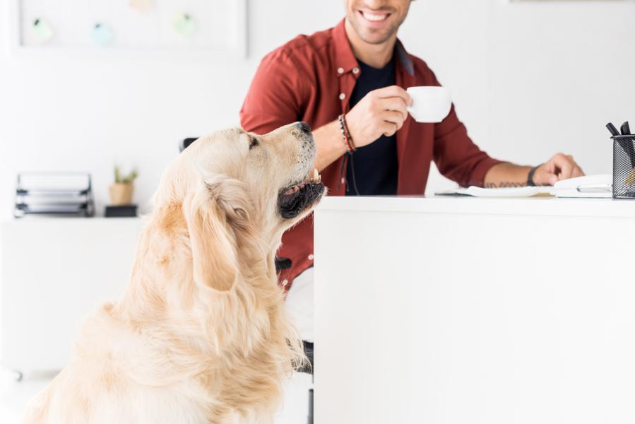 Pet-Friendly Workplaces Are a Win-Win For Employee Wellbeing And For Business - The Reports