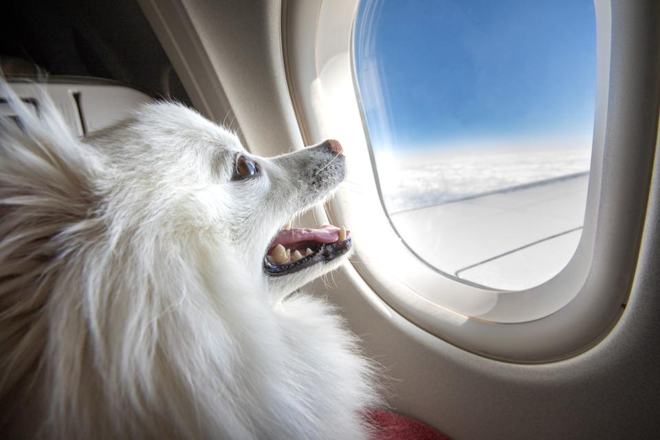 Delta's New Rules About Flying With Dogs Just Started An Important Conversation About Disabilities
