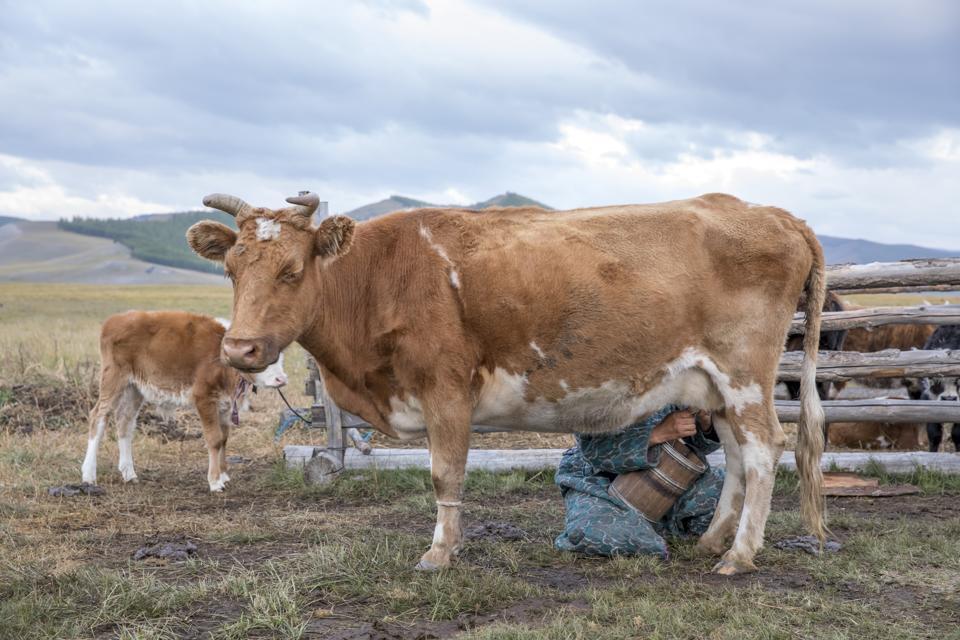 How Bronze Age Northern Mongolian Peoples Got Milk