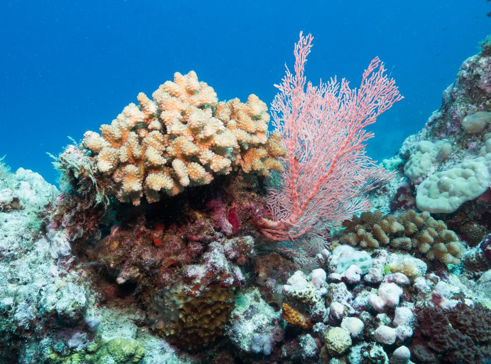 Science Begins To Look To Gene-Editing Tools Like CRISPR To Save Coral Reefs