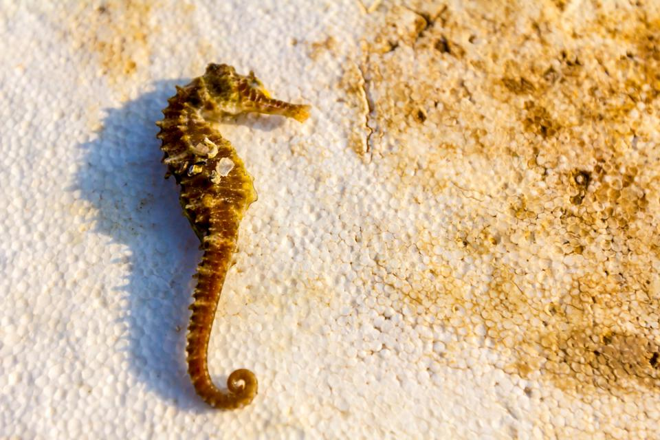 Seahorses And Sea Cucumbers: A Black Market Connecting The Italian Coasts Directly To China
