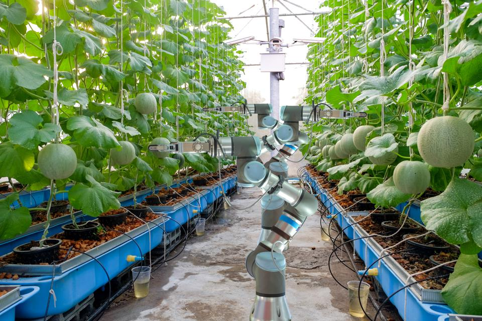 4 Ways Artificial Intelligence Will Drive Digital Transformation In Agriculture