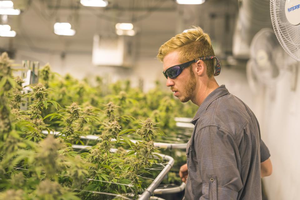 The State Cannabis Commerce Act Would Create An Import-Export Market From Sea To Shining Sea