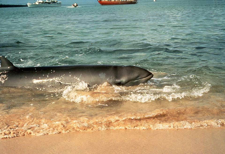 This Whale Died From Eating 88 Pounds Of Plastic; It Could Have Been Prevented
