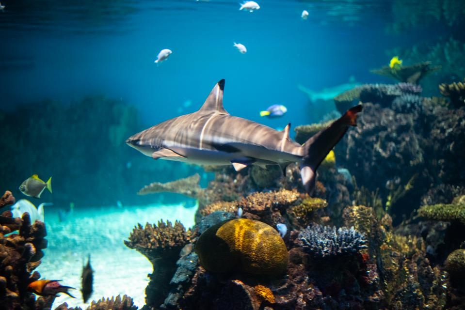 Sharks Crack The Case: Uncovering Illegal Activities In Paradise