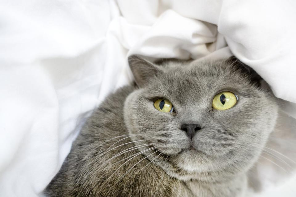 Your Cat Knows Its Name, Unless You Own Too Many, New Science Finds
