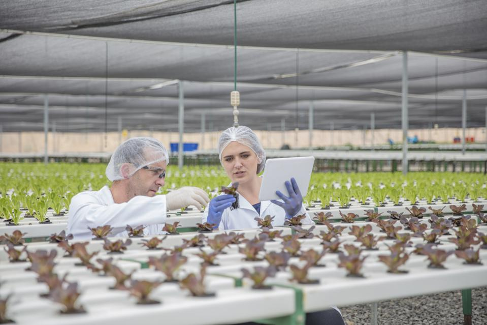 How Technology Is Transforming The Food Industry
