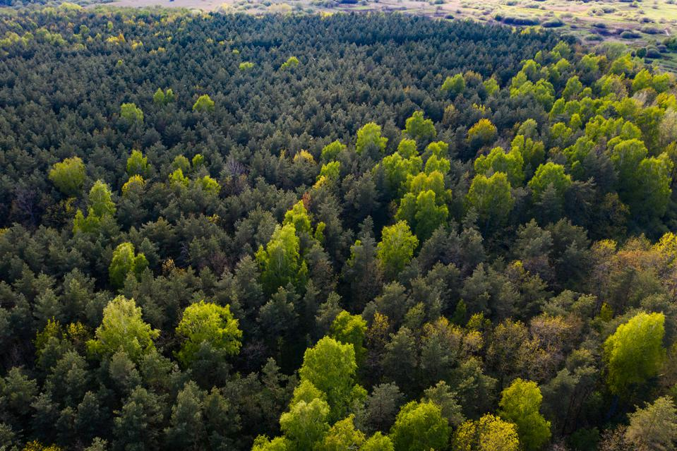 Missing The Forest For The Trees: Can Impact Investing Shift Its Focus To Where The Big Money Lives?