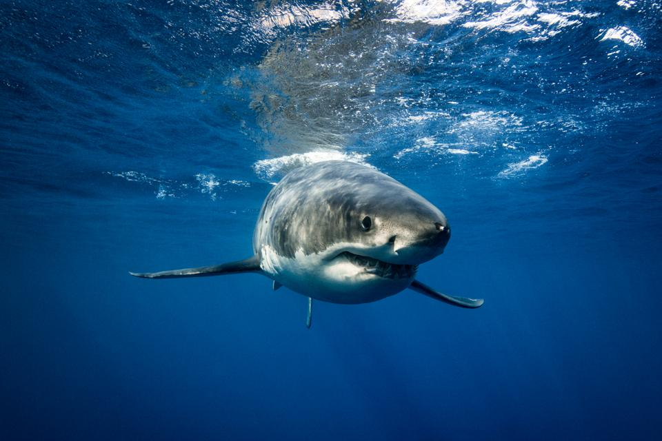 Yes, There Are Sharks By New York And New Jersey