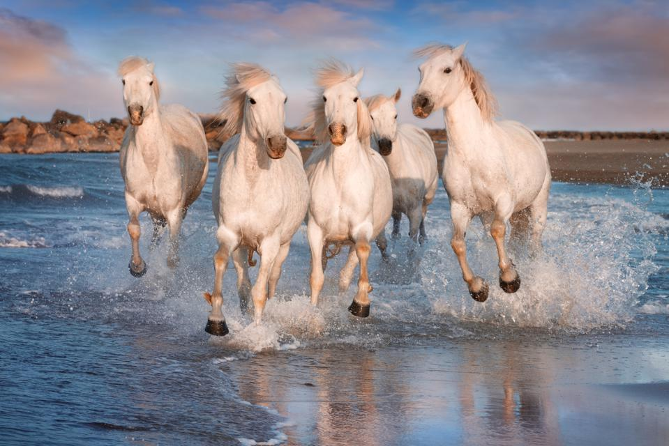Why Leaders Must Harness The 'Wild Horses' Of Emotion