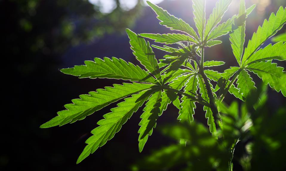 Congressional Funding Bill Protects Cannabis Banking And Lets DC Legalize Marijuana Sales