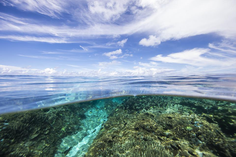 How Dredging Adds Stress to Already Struggling Coral Reefs