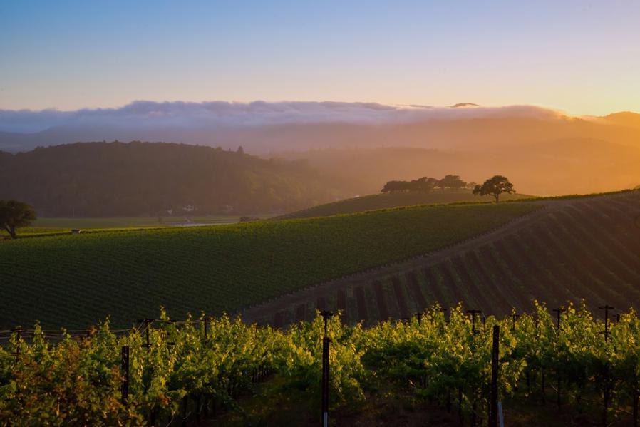 Peter Mondavi Jr. Talks Of Napa Valley Wines And The Future