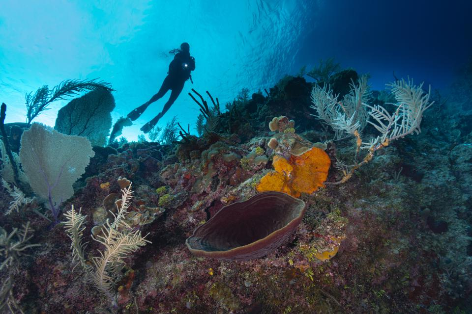 What Should Beginners Know About Recreational Diving?