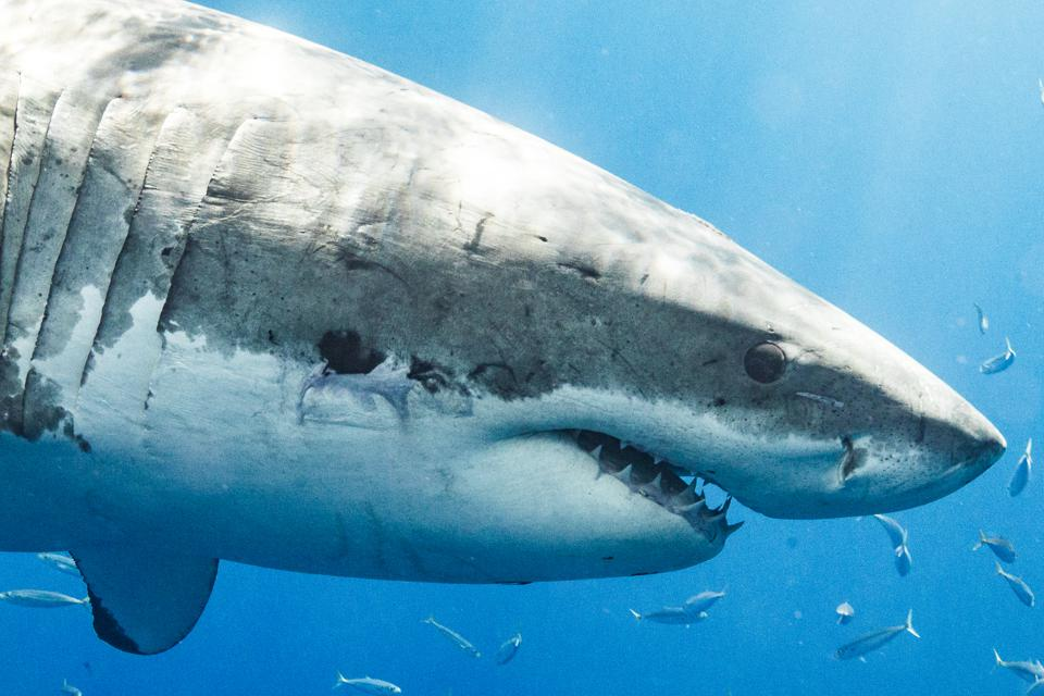 Summer Of The Shark: The Truth About Shark Attacks