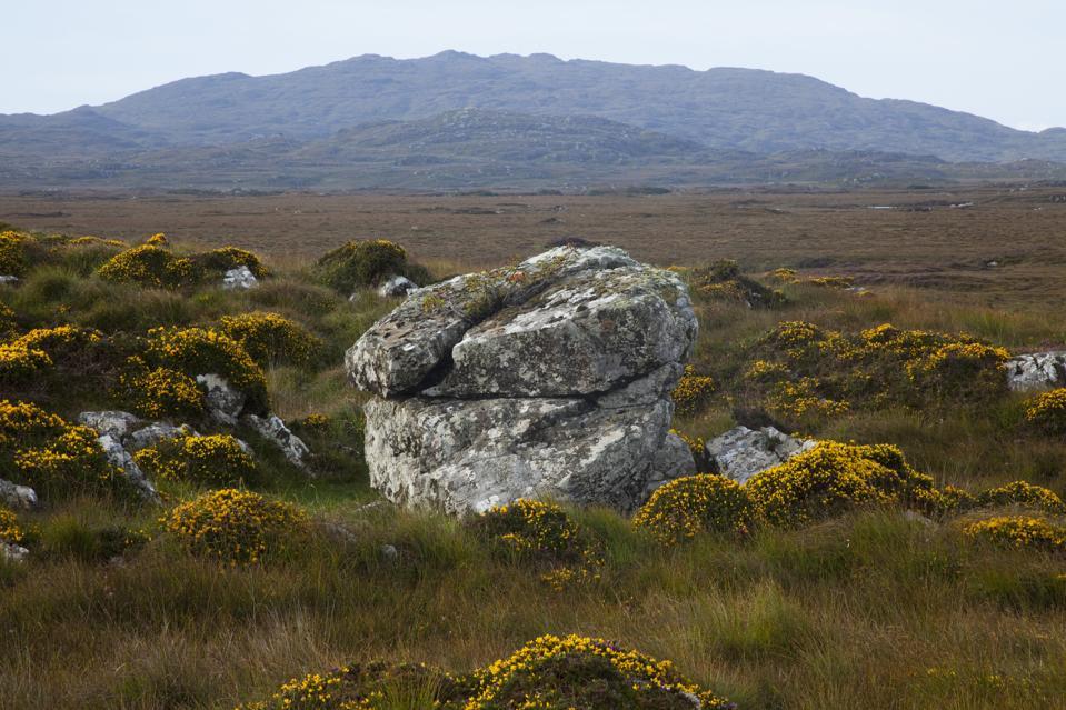 Walk On Ireland's Wild Side Between Burren And Bog