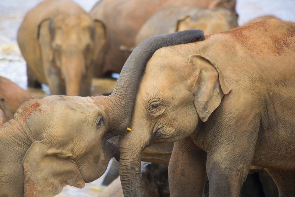 A Self-Aware Elephant Lawyers Up