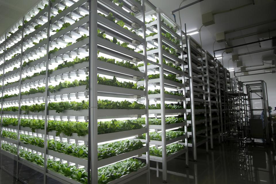 AgTech: A Great Investment For The Future