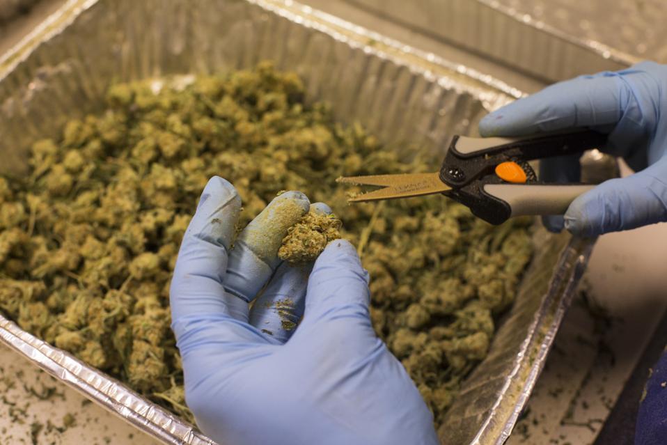 Cannabis Is Becoming A Huge Job Creator