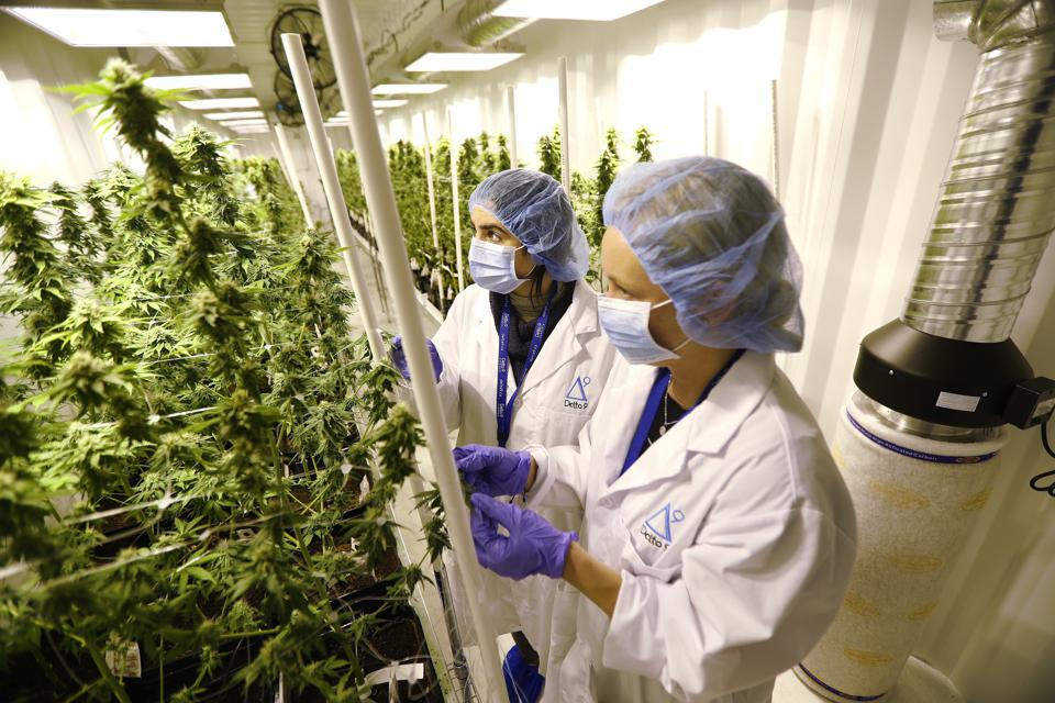 The Times They Are A Changin': Canada's Legal Cannabis Will Change Everything