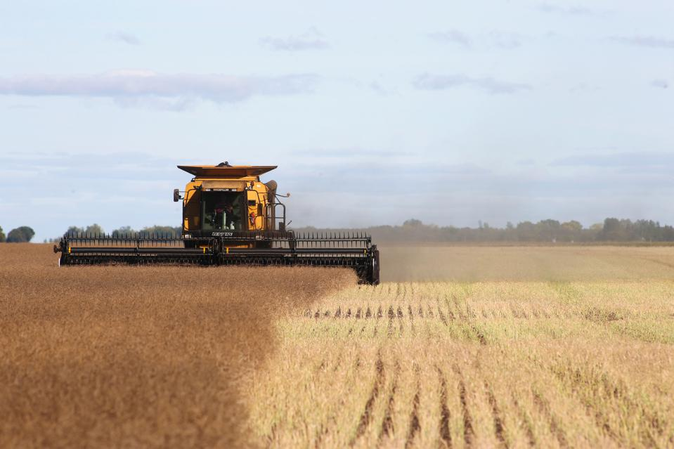 The Ins And Outs Of Tax-Loss Harvesting