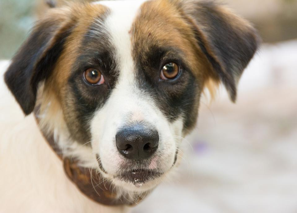 AI Startup Develops Facial Recognition Software For Dogs