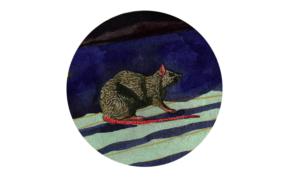 Duer Rat