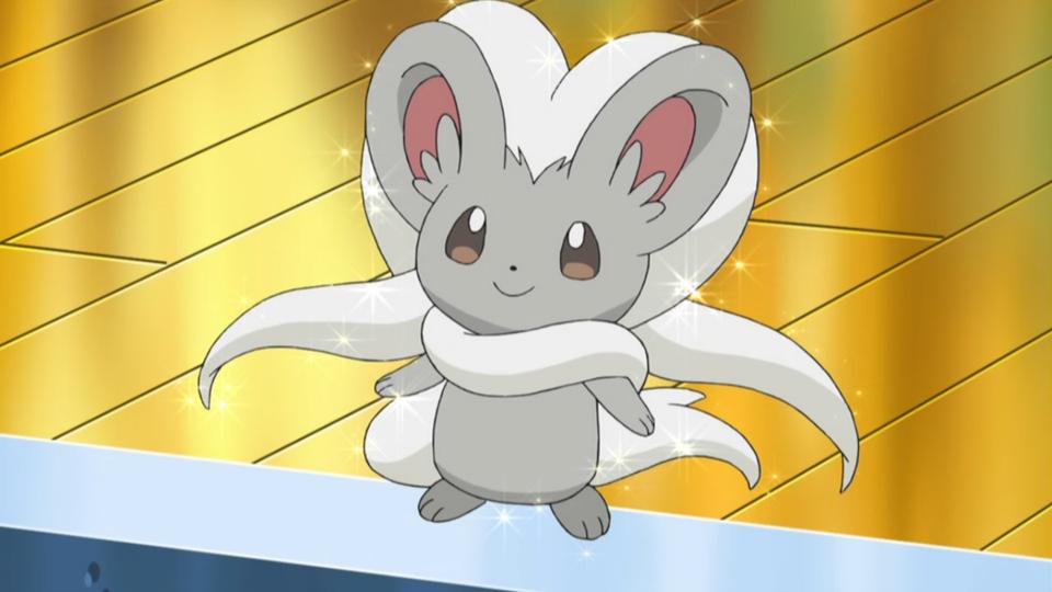 Cinccino in the Pokemon anime