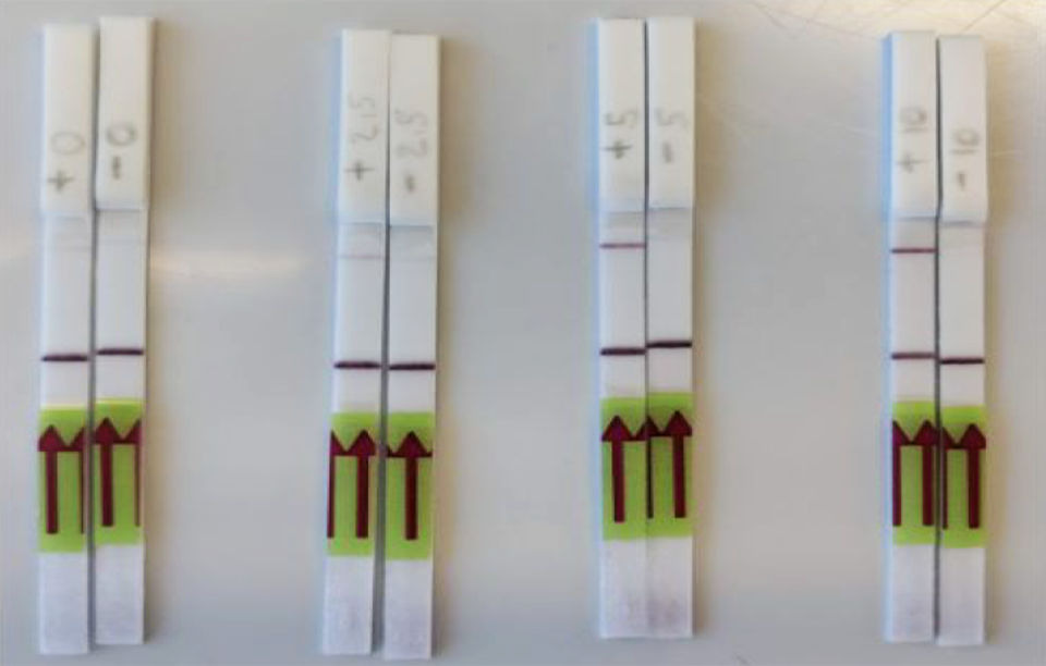 Paper strip tests used in detecting coronavirus