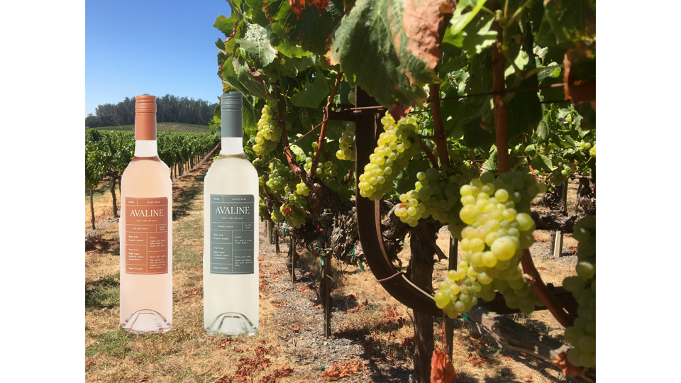 Two bottles of rose and white sit on a vineyard next to white grapes.