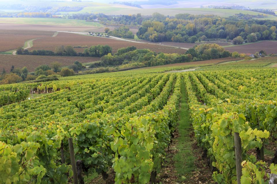 "Wines Of The Week: Domaine Laroche Grand Cru Les Clos And Sea Smoke ""Ten"" Pinot Noir"
