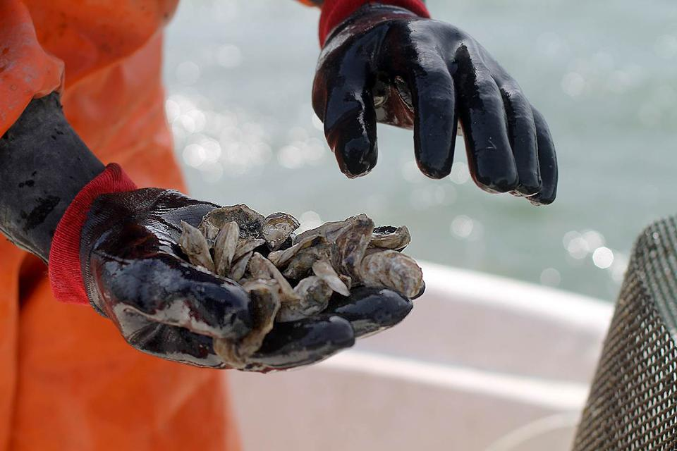 Could Prize-Based Competitions Help Pacific Northwest Shellfish Cope With Acidic Seawater?