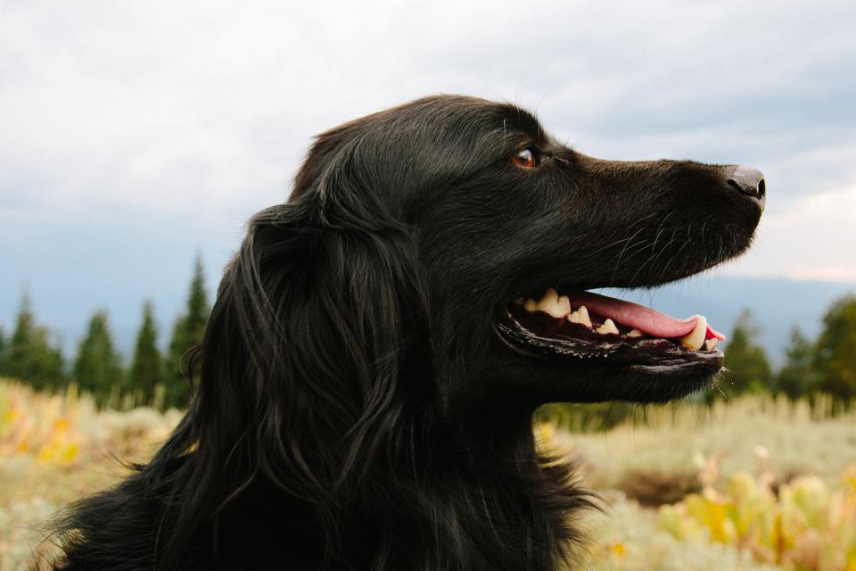 Win A Free Trip Just For Posting Your Dog On National Puppy Day