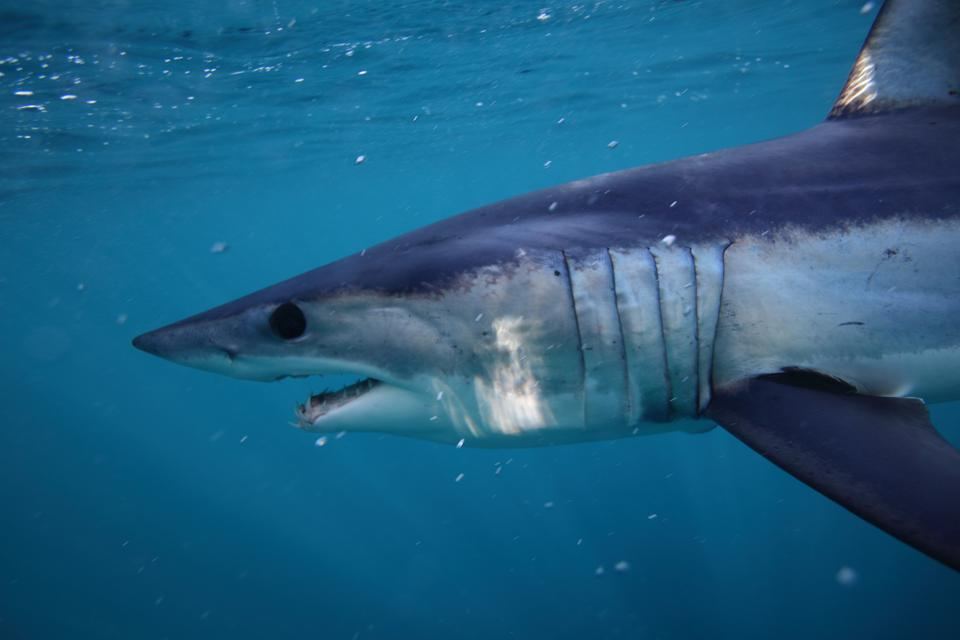 Victory for Sharks and Rays at World Wildlife Conference