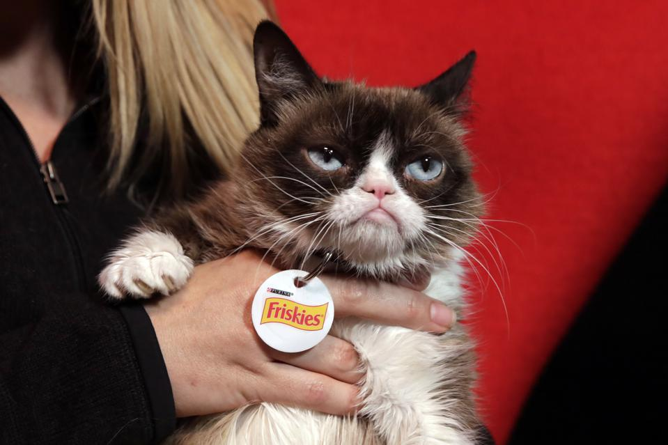 R.I.P. Grumpy Cat, The Face That Launched A Million Memes