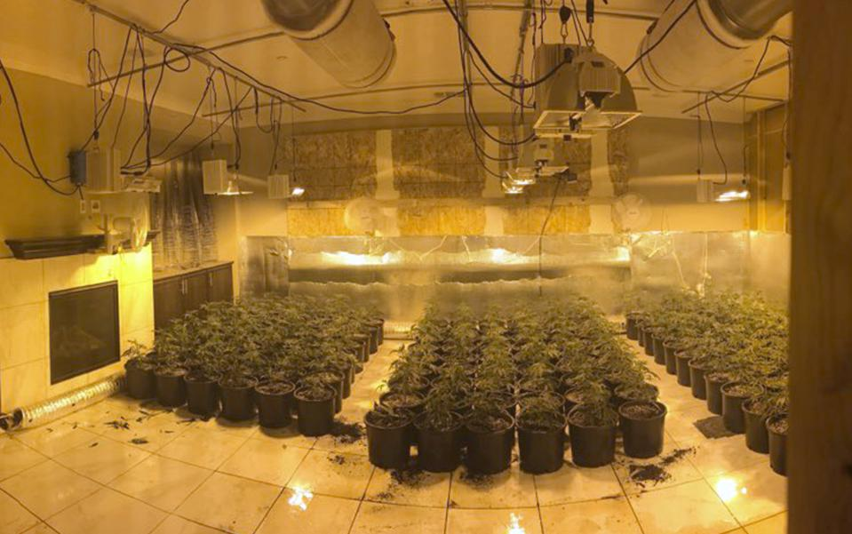 Illegal marijuana grow houses often steal electricity to help boost profits.