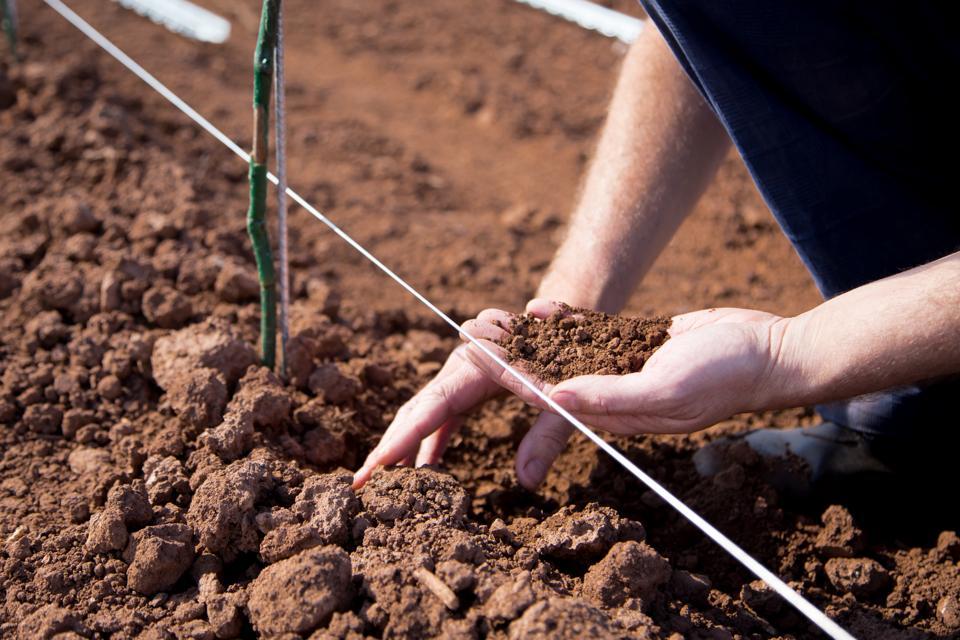 best soil for wine
