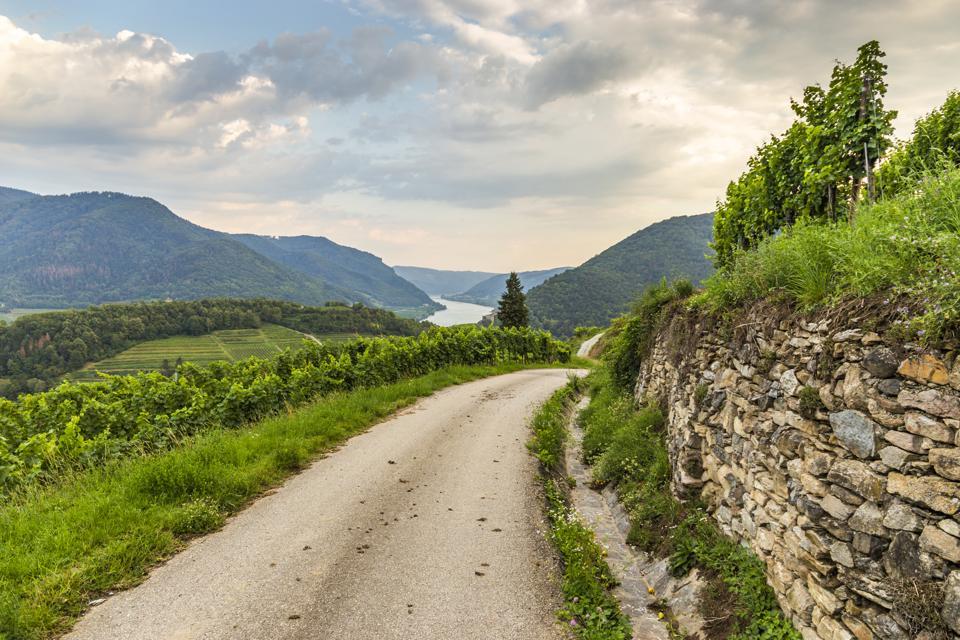 Road to vineyards in Wachau valley. Austria.
