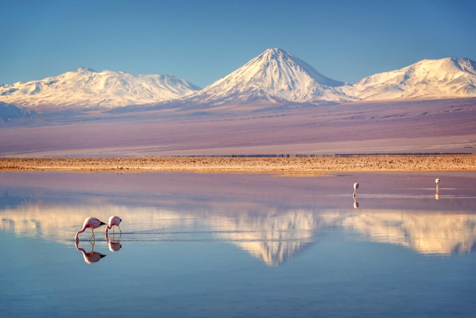 Snowy Licancabur volcano in Andes montains reflecting in the wate of Laguna Chaxa with Andean flamingos, Atacama salar, Chile. It's one of the best places to visit.