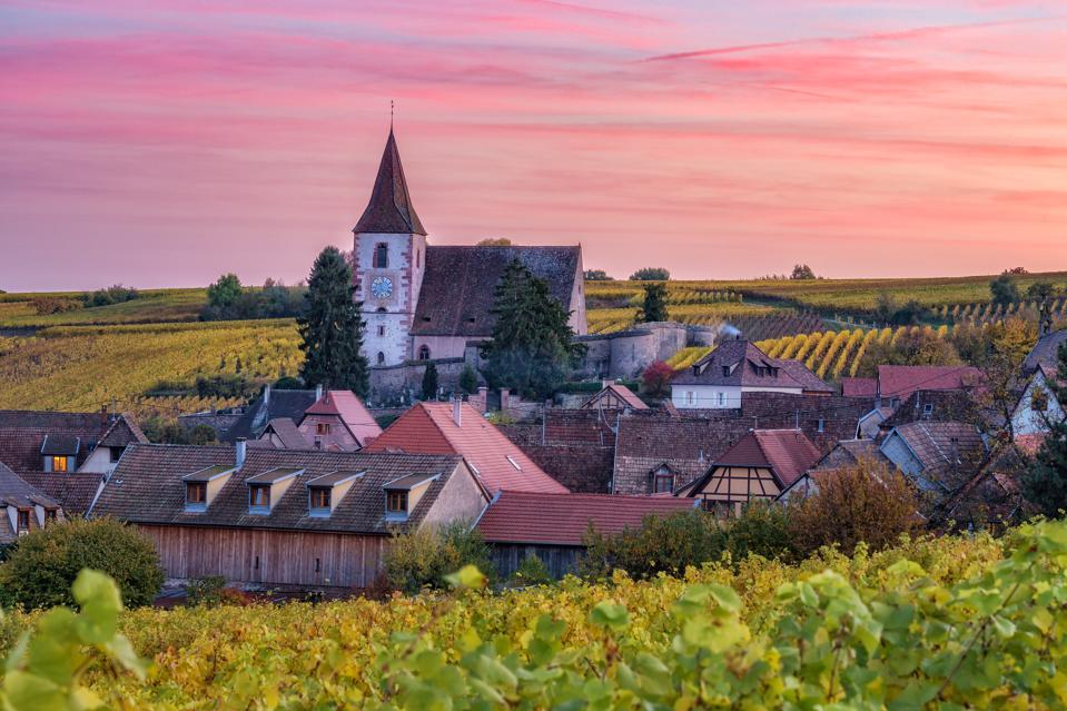 Scenic autumn landscape with a historic castle in Alsace, France, and vineyards growing on hills against sunset sky.