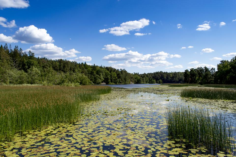 Lake in Nacka Nature Reserve