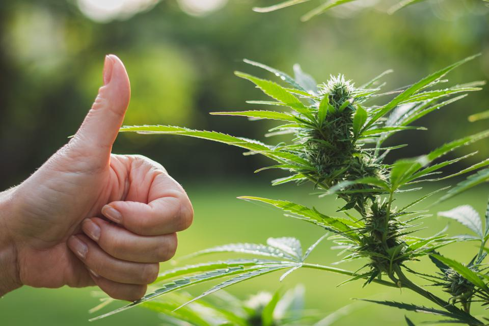 Vaping Injury Outbreak Hasn't Hurt Marijuana Legalization Support, Gallup Poll Shows