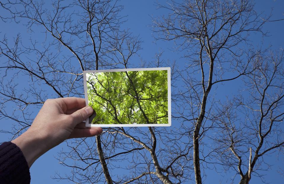 Hand holding snapshot of trees