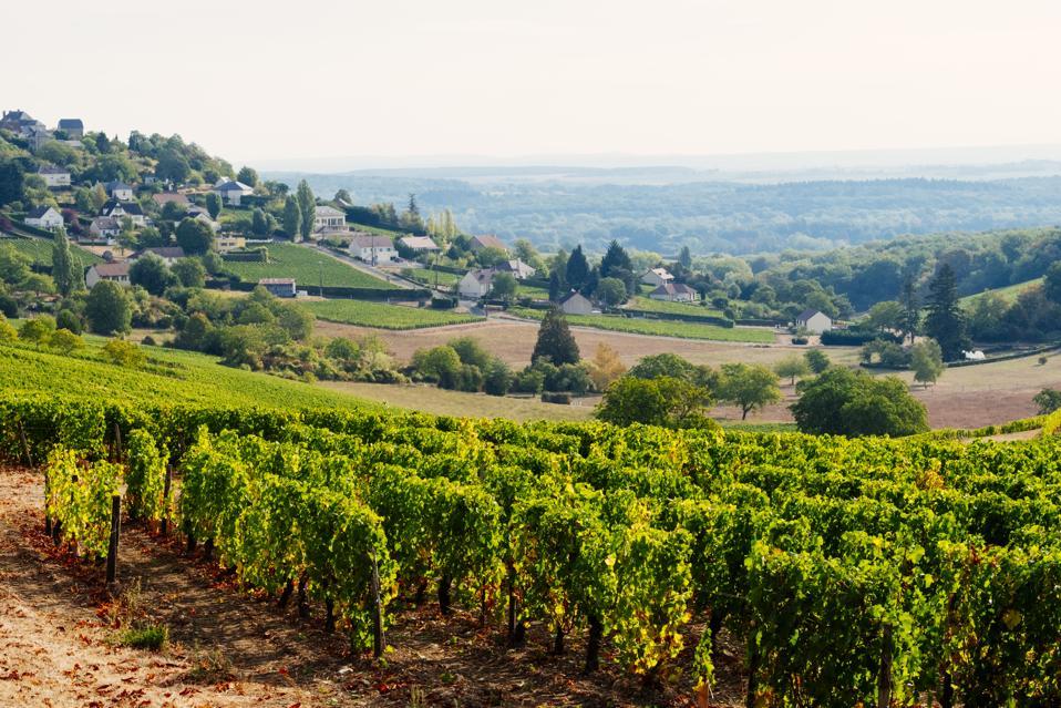 Vineyards at Sancerre, Loire Valley, France