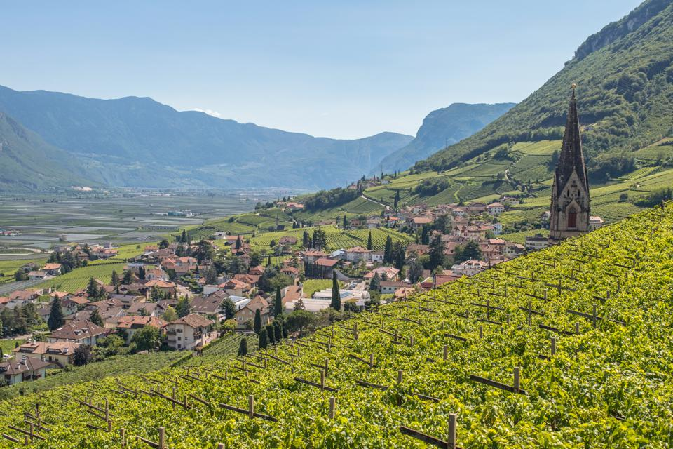 Vineyards of Termeno - Tramin, South Tyrol, Italy