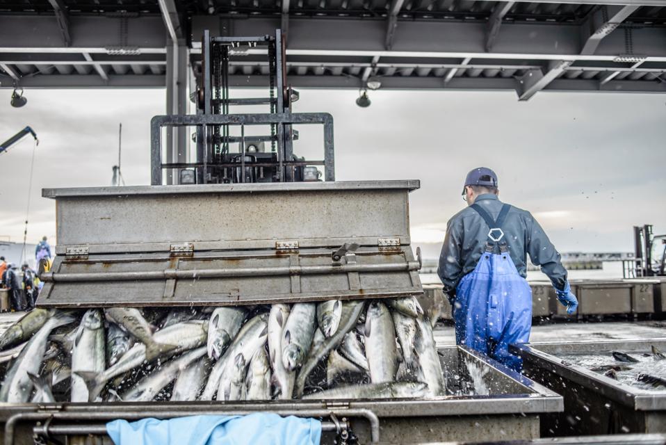 Japanese Fishing Industry
