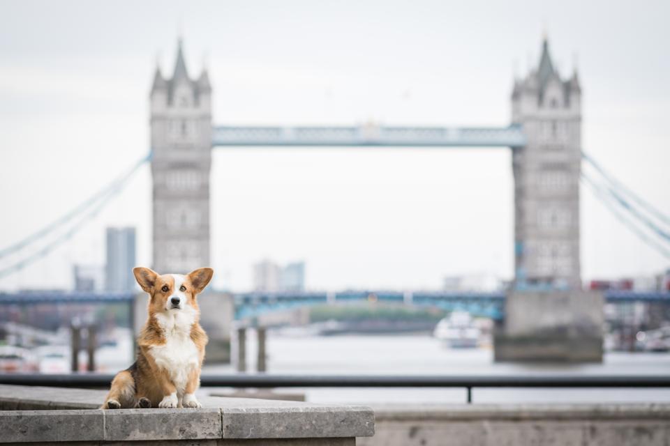 The Best Pet-Friendly Hotels In London