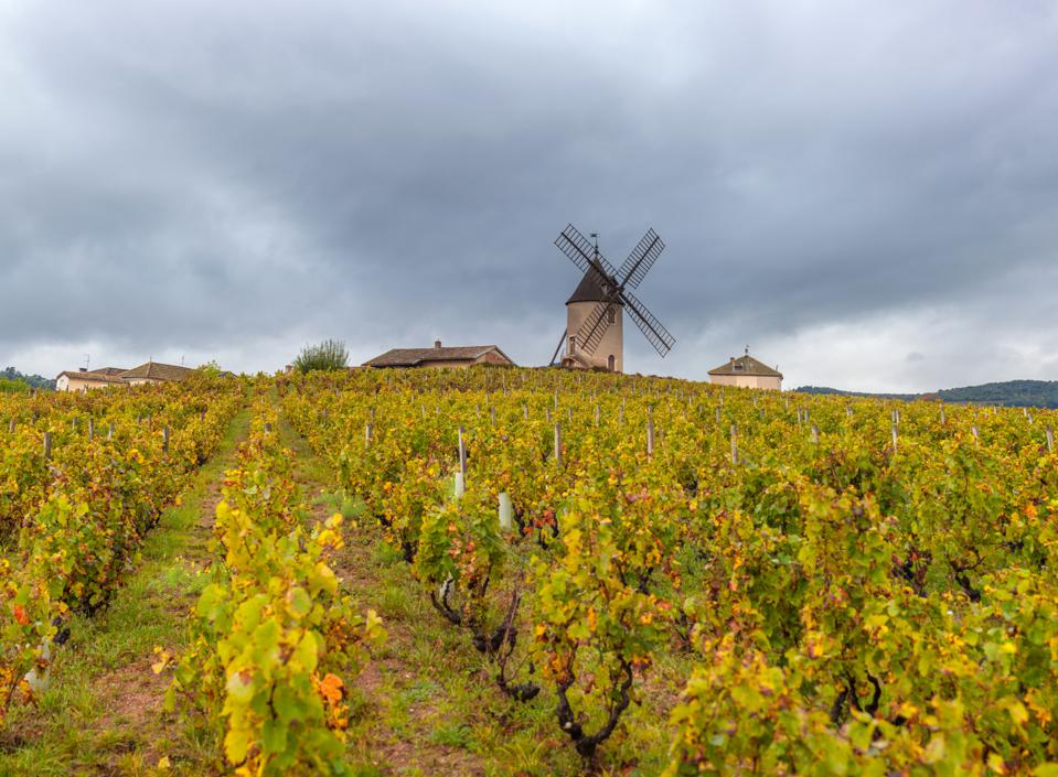 Moulin-a-Vent and vineyards in Beaujolais wine growing area, France